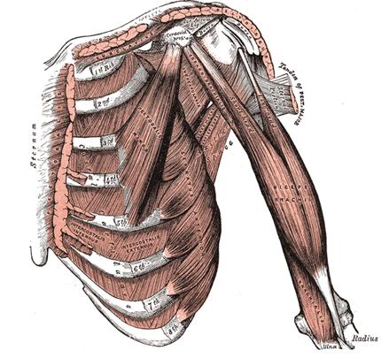 Shoulder Dystocia